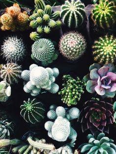Multiple succulents