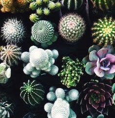 Multiple succulents